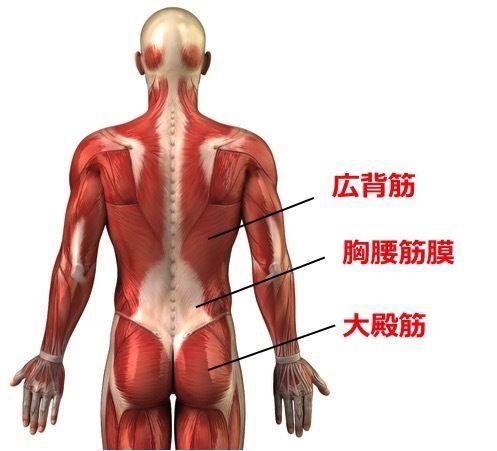 筋筋膜性腰痛 | アレックス脊椎...