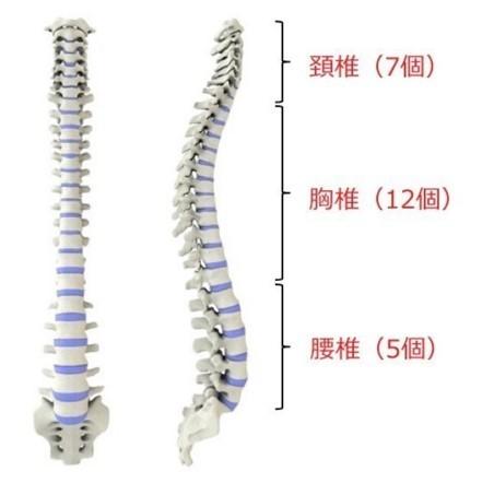 腰椎 圧迫 骨折 腰椎圧迫骨折の治療法とリハビリ方法