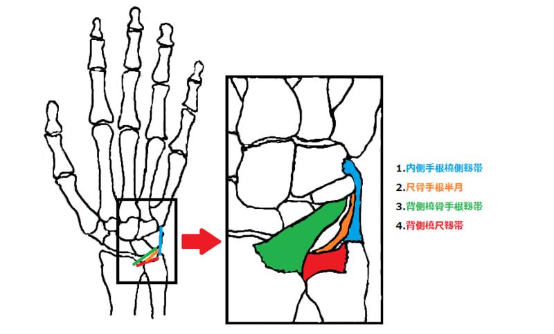 手関節TFCC損傷(三角線維軟骨複合体)   AR-Ex 尾山台整形外科