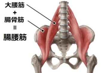 腰 筋 ストレッチ 腸