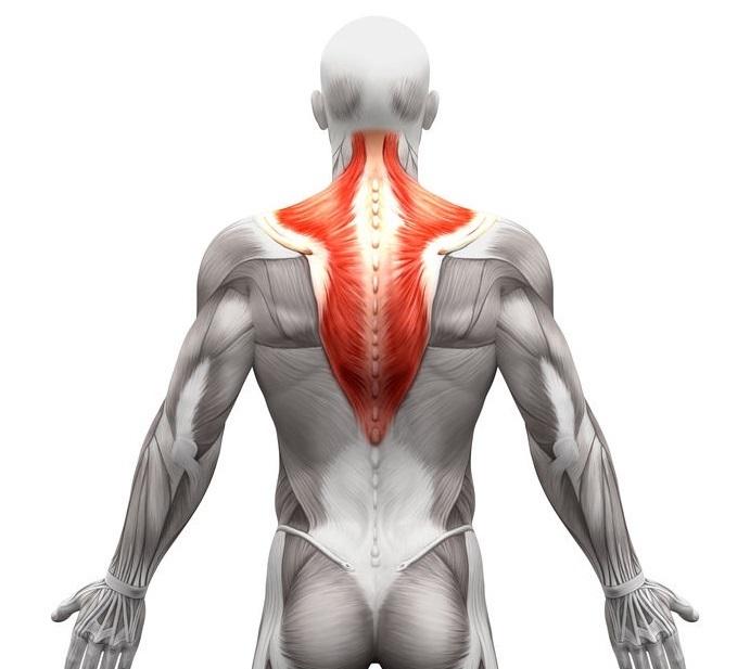 僧帽筋筋膜症 | 長野整形外科クリニック