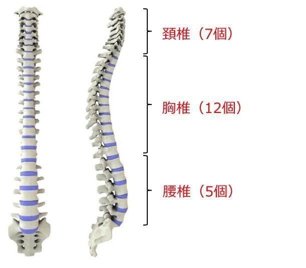「胸椎 腰椎」の画像検索結果