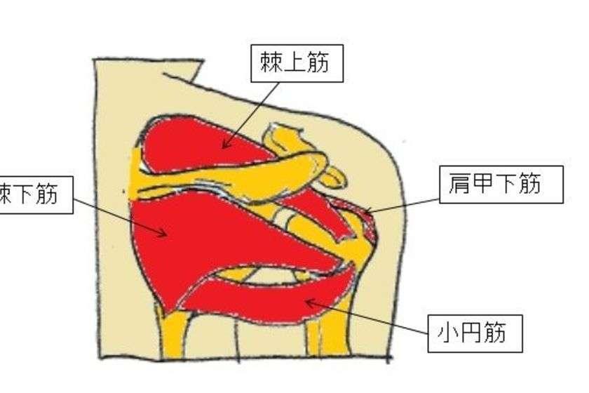 断裂 腱 板